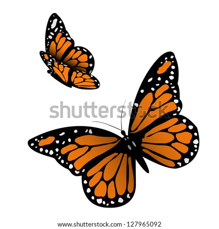 Monarch Butterfly. Vector illustration