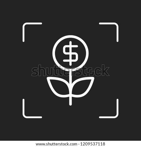 money flower with dollar money