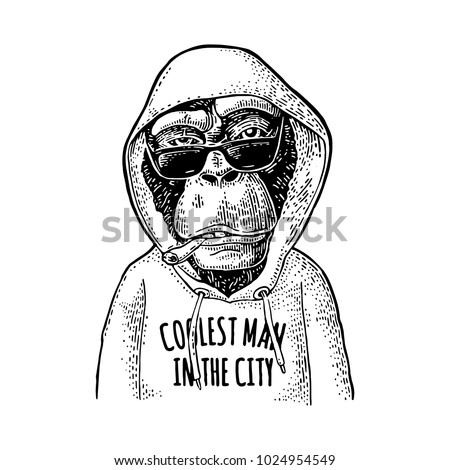 Monkey hipster dressed in the hoodie with lettering coolest man in the city. Vintage black engraving illustration. Isolated on white background. Hand drawn design element for poster