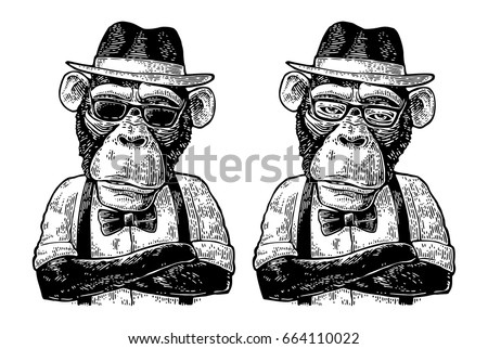 Monkey hipster with paws crossed dressed in human hat, shirt, sunglasses and bow tie. Vintage black engraving illustration for poster. Isolated on white background