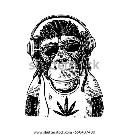 Monkey in headphones, sunglasses and t-shirt with marijuana leaf. Vintage black engraving illustration for poster. Isolated on white background