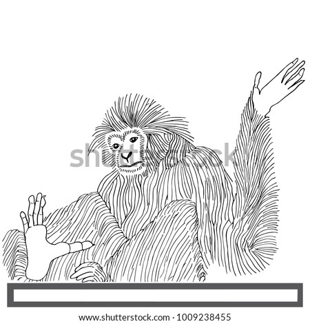 monkey langur hand drawn on...