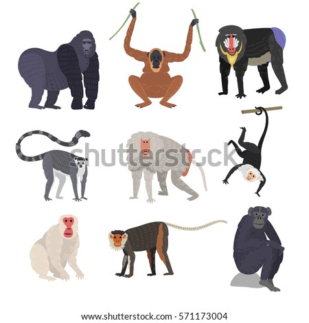Monkey set character rare animal different types of monkeys in wild zoo ape chimpanzee baboon gibbon gorilla monkeyshines vector isolated on white illustration.