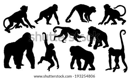 monkey silhouettes on the white