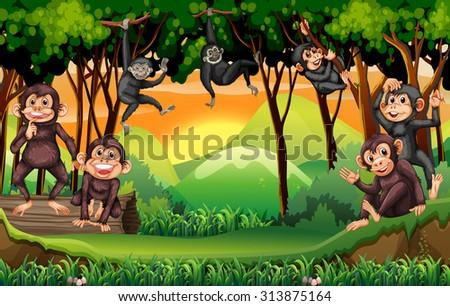 monkeys climbing tree in the
