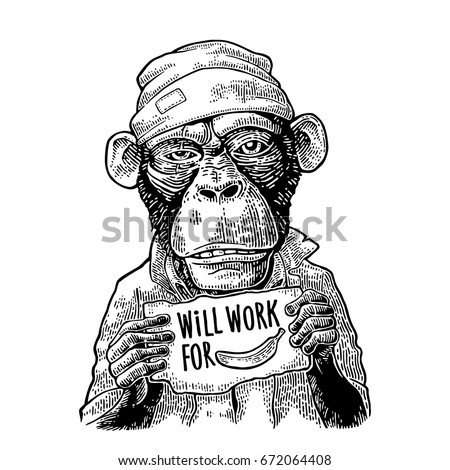 Monkeys dressed  in a hat and a robe holding a table with lettering WILL WORK FOR FOOD. Vintage black engraving illustration for poster and t-shirt.