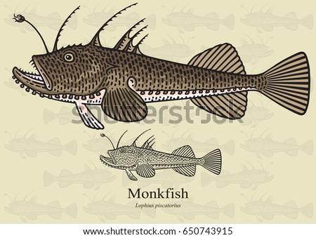 monkfish vector illustration