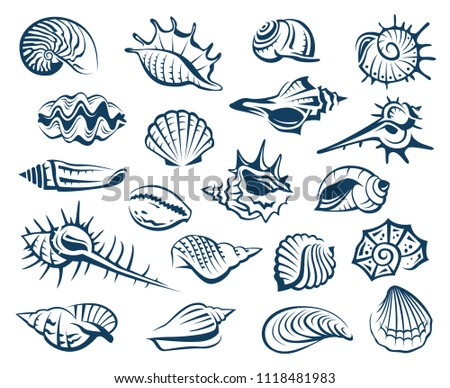 monochrome collection of various seashells