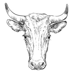 Monochrome cow head sketch hand drawn vector illustration isolated on white background. Vintage illustration of horned bull front view for label, poster, print and design.
