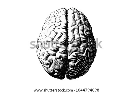 Monochrome engraving brain illustration in top view isolated on white background