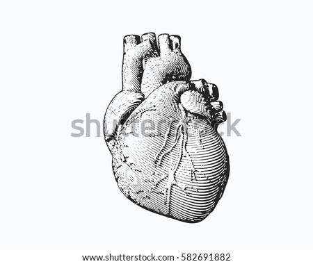 Monochrome engraving human heart illustration isolated on white background