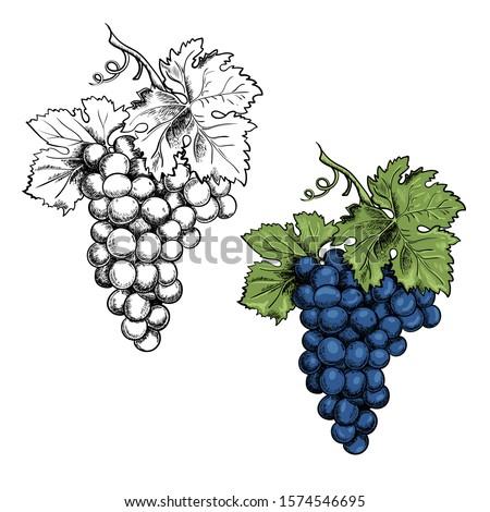 monochrome illustration grape