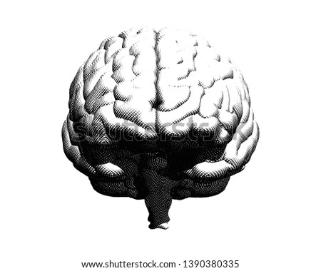 Monochrome vector engraving crosshatch drawing human brain front view illustration isolated on white background