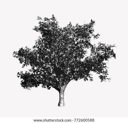 Vintage lithograph vectors download free vector art stock monochrome vintage engraving tree illustration isolated on white background altavistaventures Image collections