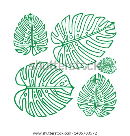 Monstera.  Monstera leaves hand drawn vector illustration. Sketch drawing leafs. Part of set.