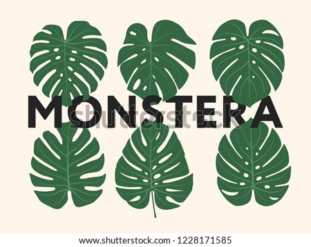 Monstera Tropical Jungle Plant Green Leaves. Flat Vector Illustration Set Isolated on White.