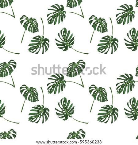 Monstera Tropical leaves seamless pattern on white background. Vector illustration