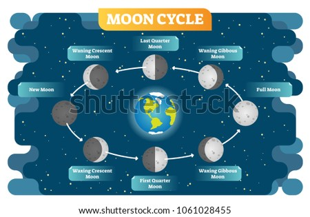 moon cycle vector illustration