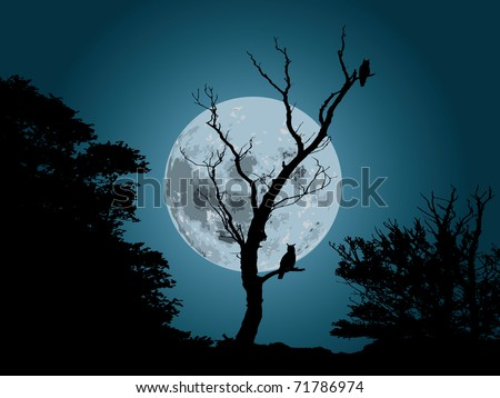 moonlight forest background