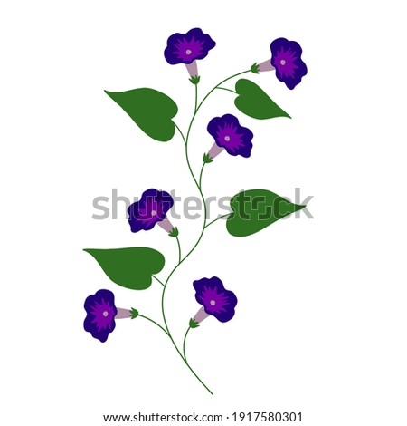 morning glory isolated vector