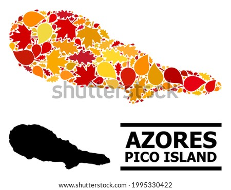 Mosaic autumn leaves and usual map of Pico Island. Vector map of Pico Island is designed with scattered autumn maple and oak leaves. Abstract geographic plan in bright gold, red, Foto stock ©