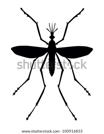 Mosquito silhouette. Close up. Vector eps 8