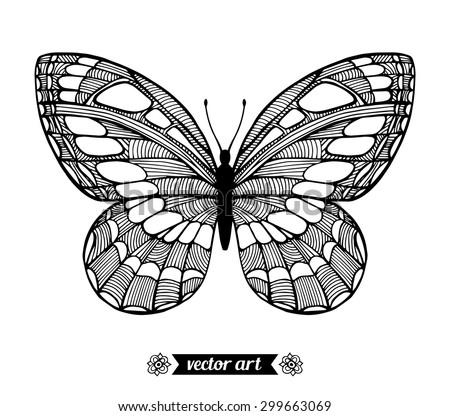 moth  wildlife insect amazing