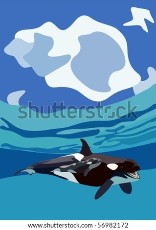 whale pictures underwater. whale in underwater ocean