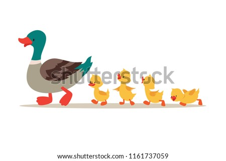 Mother duck and ducklings. Cute baby ducks walking in row. Cartoon vector illustration. Duck mother animal and family duckling Foto stock ©