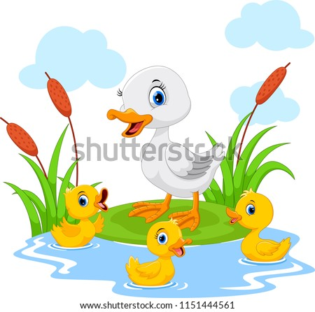 mother duck swims with her