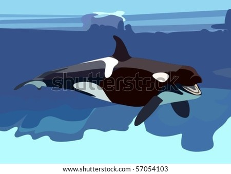whale pictures underwater. killer whale in underwater