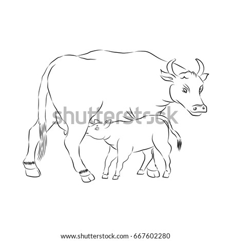 Motherhood. Mother And Child. Cow And Calf Outline Vector Silhouette Illustration. Sketch Hand Drawn Vector Cow Feeding Calf.