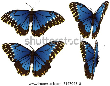 motions frames of morpho blue