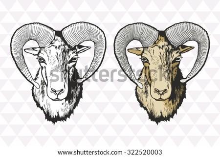 mouflon vector hand drawn