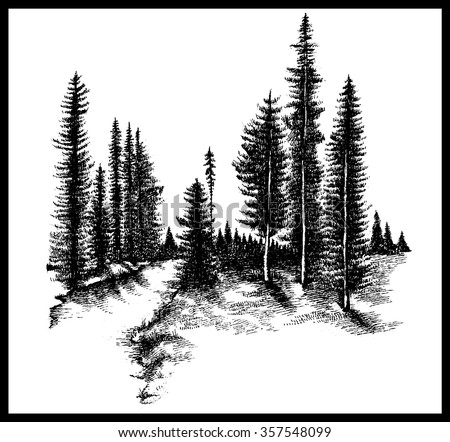 mountain forest pine trees...