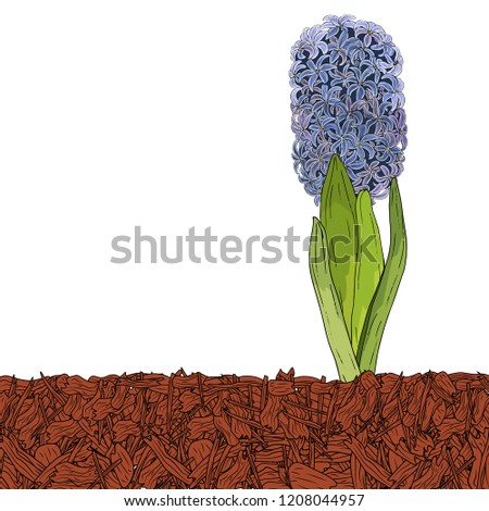 Mulching of beds, plants, soil protection. Hydrangea. Landscape design color mulch. Vector illustration.