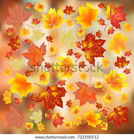 multicolored autumn leaves on a