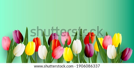 multicolored tulips place for