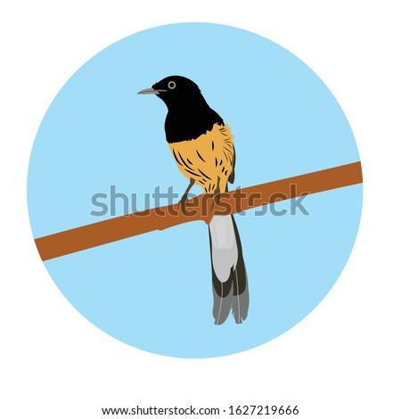 Vektor Burung Murai Hitam Putih