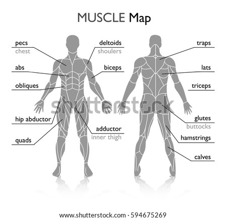 Muscles in the body, vector