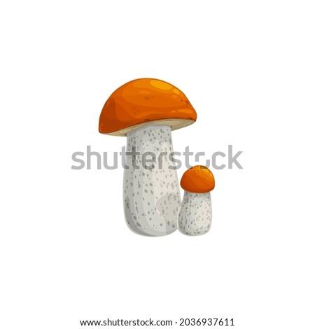 mushroom  autumn fall harvest
