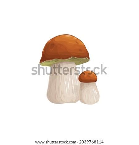 mushroom cep vector icon
