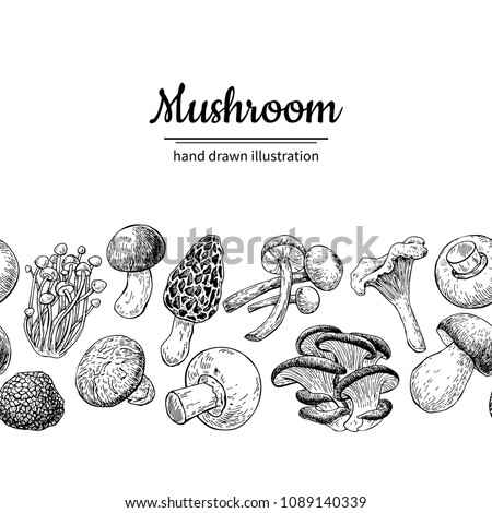 Mushroom drawing vector seamlees border. Isolated   food frame sketch. Champignon, morel, truffle, enokitake, porcini, oyster, chanterelle, shiitake. Great for menu, label, product packaging,
