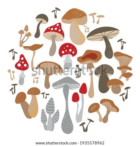 Mushroom set of vector illustrations isolated on white. White mushroom, chanterelles, honey agarics, mushrooms, fly agarics, morels. A set of ingredients for the witch's potion. Cartoon style.