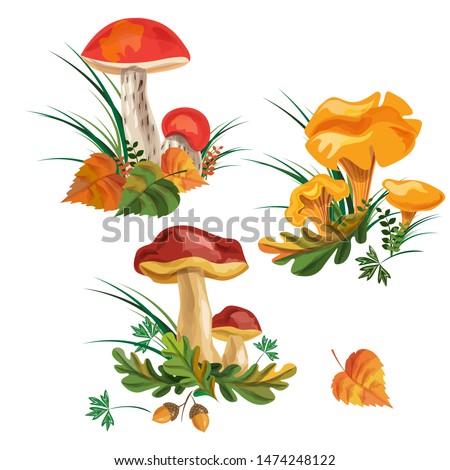 mushroom set. three kinds of mushrooms. boletus, mushroom chanterelle, orange-cap boletus. vector watercolor. EPS 10.