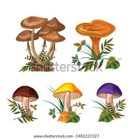 mushroom set three kinds of