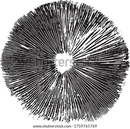 mushroom spore print vector