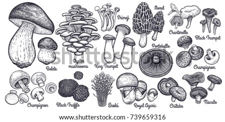 Mushrooms. Bolete, Morel, Truffle, Agaric, Shimeji, Champignon, Chanterelle, Black and King Trumpet, Oyster mushrooms, Porcini, Niscalo, Portobello, white button isolated. Vintage. Vector illustration