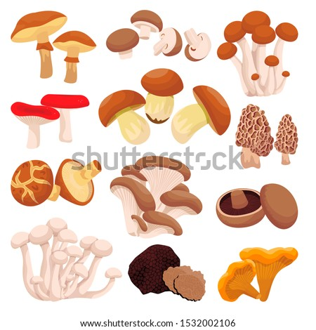 Mushrooms collection, isolated on white background. Vector flat cartoon illustration. Food ingredients design elements. Autumn harvest of forest edible mushrooms.