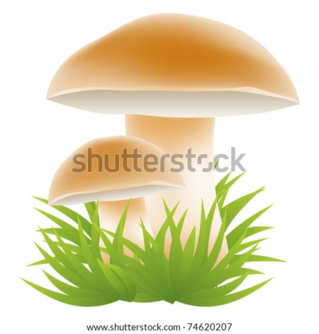 Mushrooms growing in the grass vector illustration